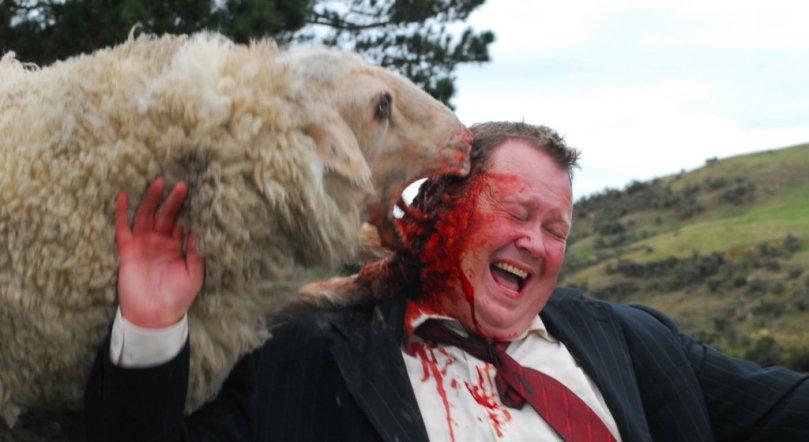 black-sheep-photos-10